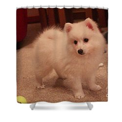 Shower Curtain featuring the photograph Daisy - Japanese Spitz by David Grant