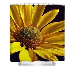 Daisy Shower Curtain by Lois Bryan