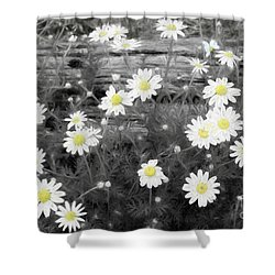 Shower Curtain featuring the photograph Daisy Patch by Benanne Stiens