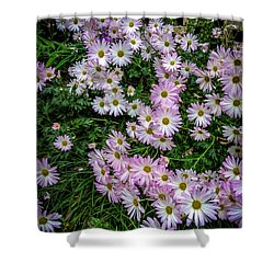 Daisy Patch Shower Curtain by David Smith