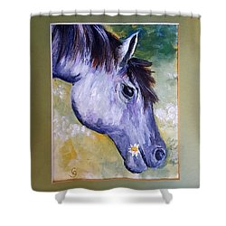 Daisy The Old Mare     52 Shower Curtain