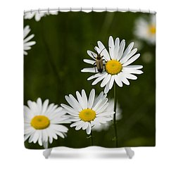 Daisy Visitor Shower Curtain by Dan Hefle