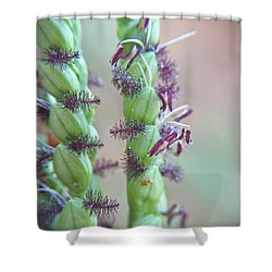 Dallisgrass Flowering Seed Head Macro Shower Curtain