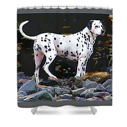 Dalmatian On The Rocks Shower Curtain by Wendy McKennon