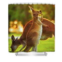Damn Flies, Yanchep National Park Shower Curtain by Dave Catley
