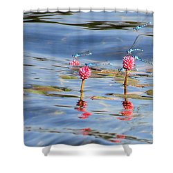Damselflies On Smartweed Shower Curtain by Michele Penner