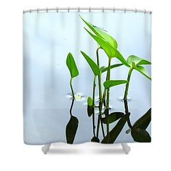 Damselfly In The Mirror Shower Curtain