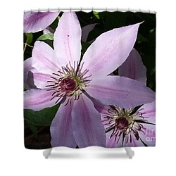 Dance Of The Clematis Shower Curtain