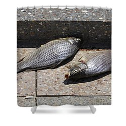 Dance Of The Dead Fish Shower Curtain