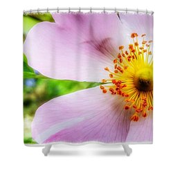 Dancers In The Wind Shower Curtain by Isabella F Abbie Shores FRSA