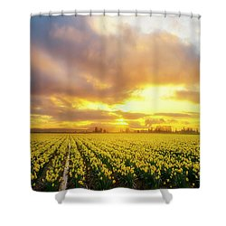 Dances With The Daffodils Shower Curtain by Ryan Manuel