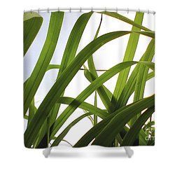 Organic Green Shower Curtain