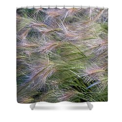 Dancing Foxtail Grass Shower Curtain