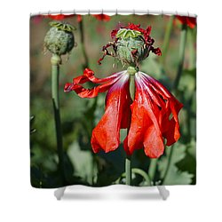 Dancing Gal Shower Curtain