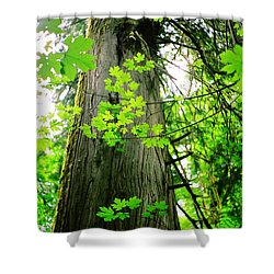 Dancing Leaves Shower Curtain by Kathy Bassett