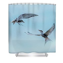 Dancing Terns Shower Curtain