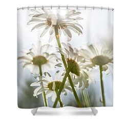 Dancing With Daisies Shower Curtain