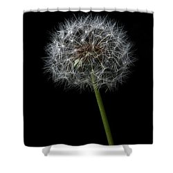 Shower Curtain featuring the photograph Dandelion 1 by James Sage
