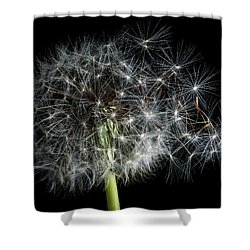 Shower Curtain featuring the photograph Dandelion 2 by James Sage
