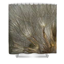 Dandelion 3 Shower Curtain