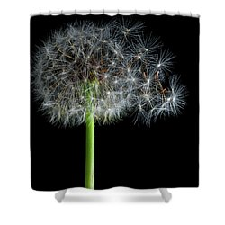 Shower Curtain featuring the photograph Dandelion 3 by James Sage