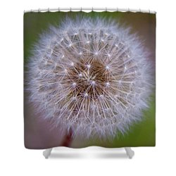 Shower Curtain featuring the photograph Dandelion by April Reppucci