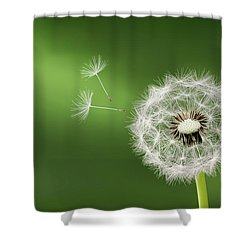Shower Curtain featuring the photograph Dandelion by Bess Hamiti