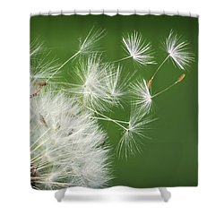 Shower Curtain featuring the photograph Dandelion Blowing by Bess Hamiti