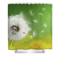 Shower Curtain featuring the photograph Dandelion Clock In Morning by Bess Hamiti