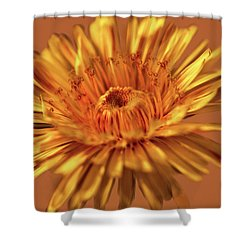 Dandelion Close #g3 Shower Curtain