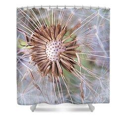 Dandelion Delicacy Shower Curtain