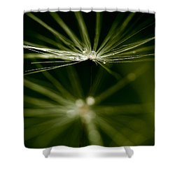 Dandelion Flower With Water Drops  Shower Curtain
