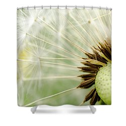 Dandelion Fluff Shower Curtain