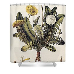 Dandelion Shower Curtain by Granger