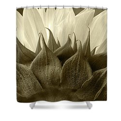 Shower Curtain featuring the photograph Dandelion In Sepia by Micah May