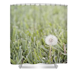 Shower Curtain featuring the photograph Dandelion In The Grass by Cindy Garber Iverson
