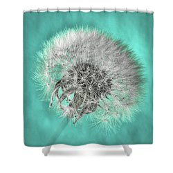 Dandelion In Turquoise Shower Curtain by Tamyra Ayles