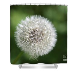 Dandelion - Poof Shower Curtain