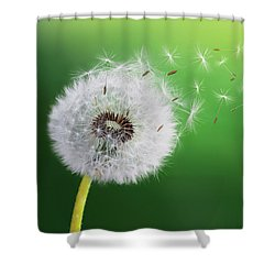 Shower Curtain featuring the photograph Dandelion Seed by Bess Hamiti