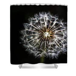 Shower Curtain featuring the photograph Dandelion Seed by Darcy Michaelchuk