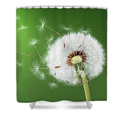 Shower Curtain featuring the photograph Dandelion Seeds by Bess Hamiti