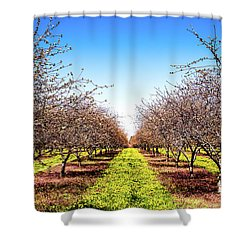 Dandelion Stripes Shower Curtain by Onyonet  Photo Studios