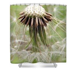 Dandelion Wish 8 Shower Curtain