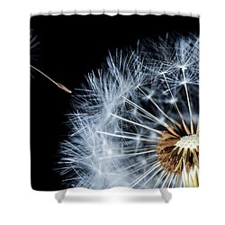 Shower Curtain featuring the pyrography Dandy by Bess Hamiti