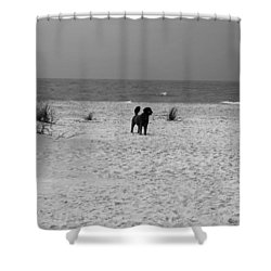Dandy On The Beach Shower Curtain