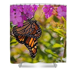 Dangling Monarch   Shower Curtain
