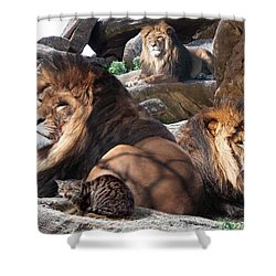 Daniel In The Lion Shower Curtain by Bill Stephens