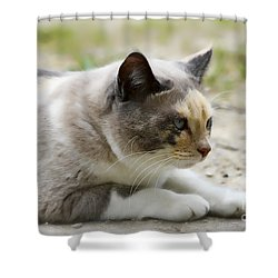 Shower Curtain featuring the photograph Danni Girl 2 by Teresa Zieba