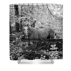 Dappled Face Horse II Shower Curtain