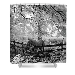 Dappled Horse Shower Curtain
